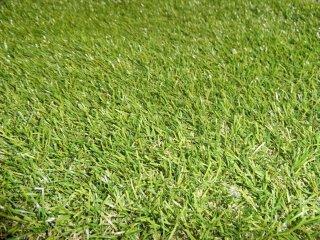หญ้าเทียม 25 มม.