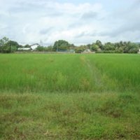 Cheap Land Low Price in Laos