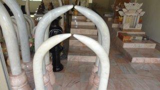 งาช้างคู่หินอ่อน สูง 200 ซม.