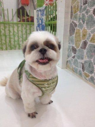 Sukhumvit pet care
