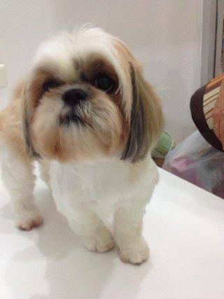 Sukhumvit dog daycare