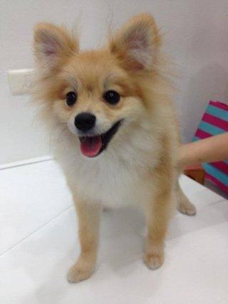 Soi Ari pet grooming