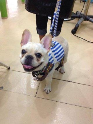 Soi Ari dog grooming