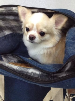 Soi Ari dog boarding