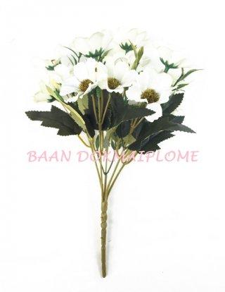 ดอกเดซี่ขาว