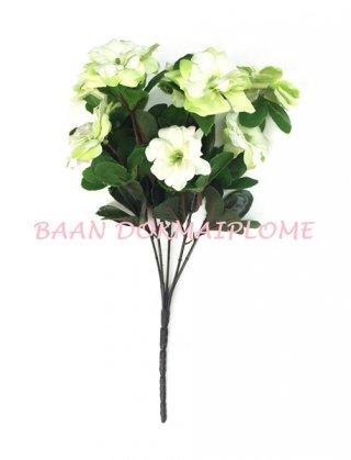 ดอกอาซาเลีย สีเขียว-ขาว