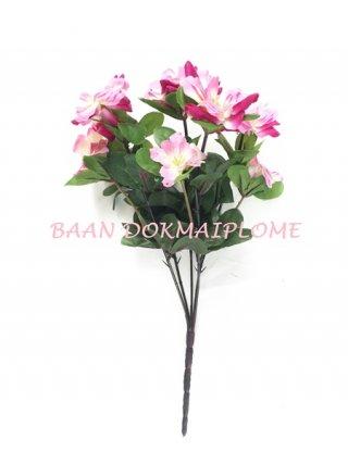 ดอกอาซาเลีย สีบานเย็น