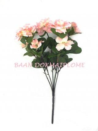 ดอกอาซาเลีย สีชมพู