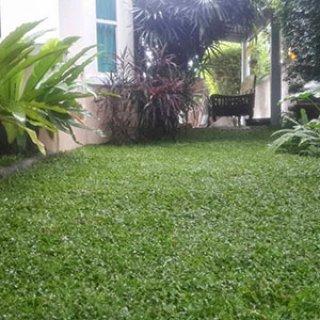จำหน่ายหญ้าจัดสวน