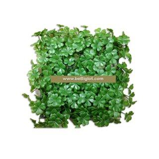 หญ้าใบหัวใจ (โคลเวอร์) 25*25 cm.