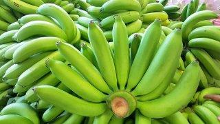 ปลูกกล้วยหอมทอง