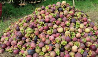 Fruit Buffet in Thailand