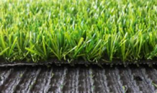 หญ้าสีเขียวขนสั้น คุณภาพเกรด A
