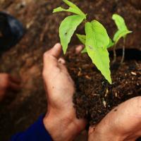 รับจ้างปลูกต้นไม้ ในเขตจังหวัดสมุทรปราการ