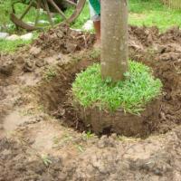 รับจ้างย้ายต้นไม้ ในเขตจังหวัดชลบุรี