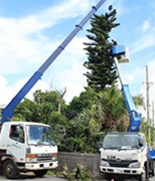 ให้เช่ารถกระเช้าโยกย้ายต้นไม้สูง