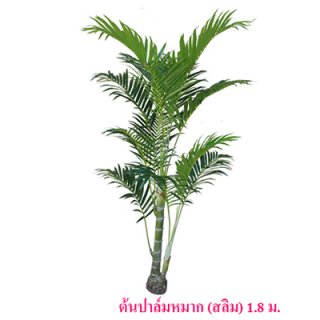 ต้นปาล์มหมาก (สลิม) ขนาดสูง 180 ซม.