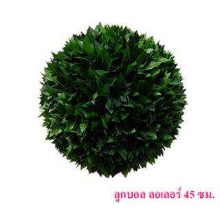 ต้นลูกบอล ลอเลอร์ 45 cm.