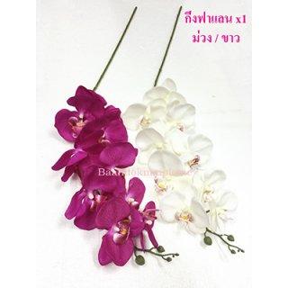 ดอกฟาแลน x1 ม่วงและขาว