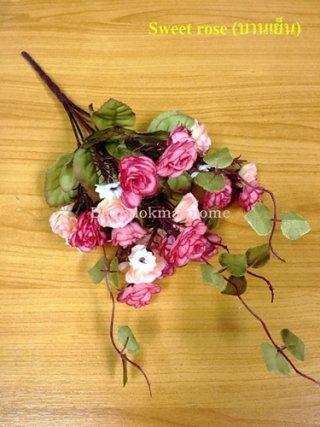 ดอก Sweet rose บานเย็น