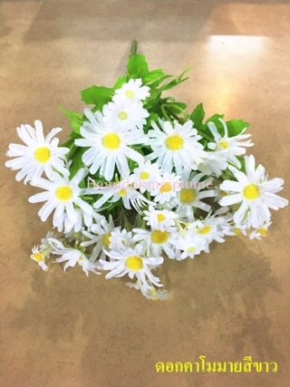 ดอกคาโมมายล์ สีขาว