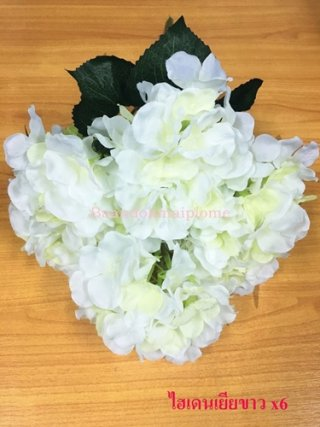 ดอกไฮเดนเยีย สีขาว x6
