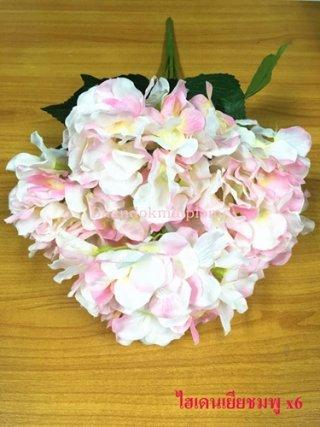 ดอกไฮเดนเยีย สีชมพู x6