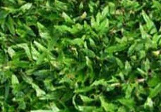 จำหน่ายหญ้ามาเลเซีย