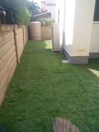 หญ้าจัดสวน กรุงเทพฯ