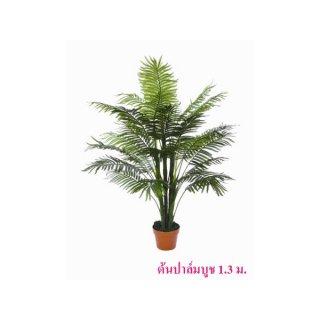 ต้นปาล์มบูช สูง 1.3 ม.