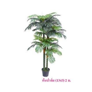 ต้นปาล์ม สูง 2 ม.