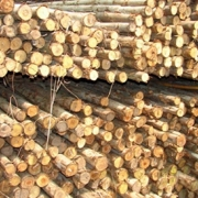 Eucalyptus Poles For Sale, Bamboo poles