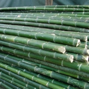 Bamboo Poles For Sale, Bamboo poles