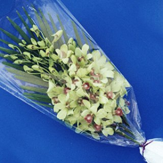 Flower Bouquet, orchid exporter