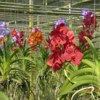 Canal Tour C (Orchid Farm-Wat Arun)