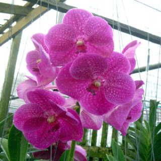 Orchid for sale